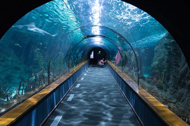 shark-tunnel-473012_640