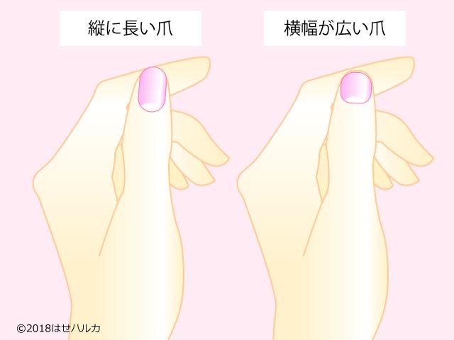 爪の形で診断
