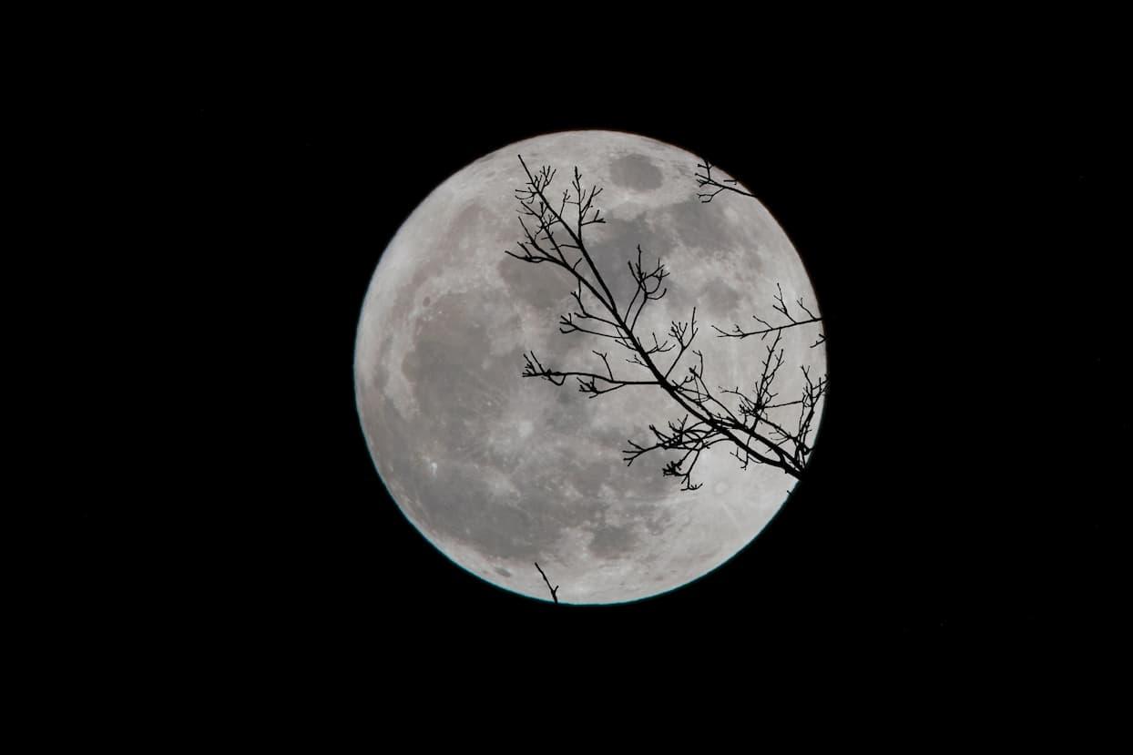 「じゃあ私は月に帰らなければいけません」