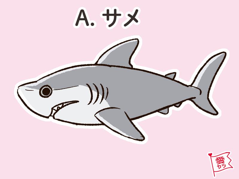 A:「サメ」を選んだあなた…